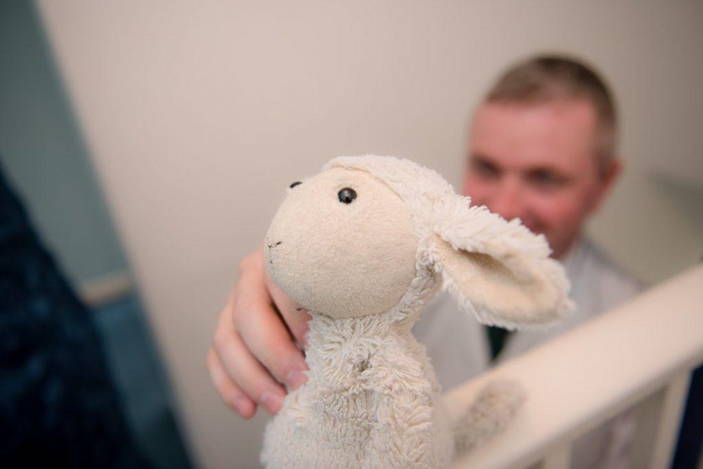 Cute cuddly lamb toy