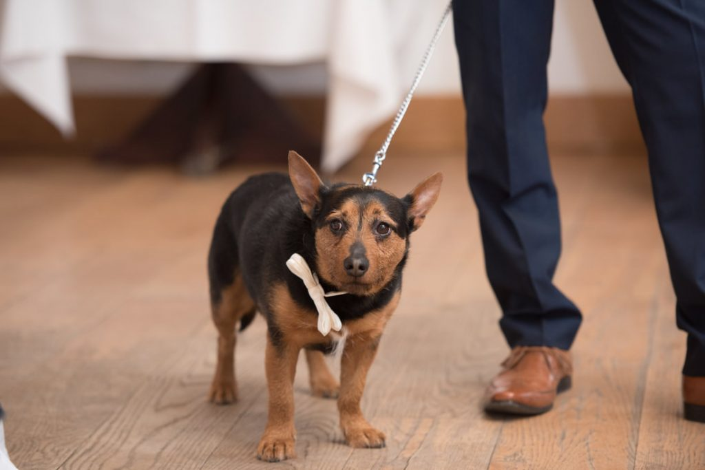 Their pet dog held the wedding rings in his collar