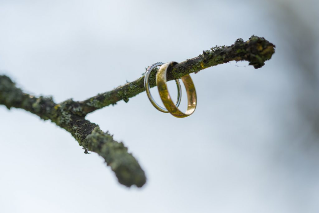 Wedding rings hanging on a tree