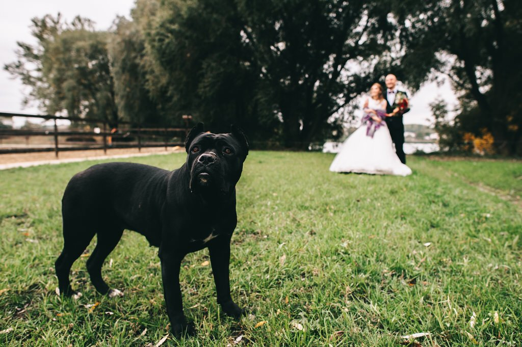 Including Your Pet At Your Wedding
